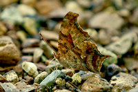 A Comma At Rest